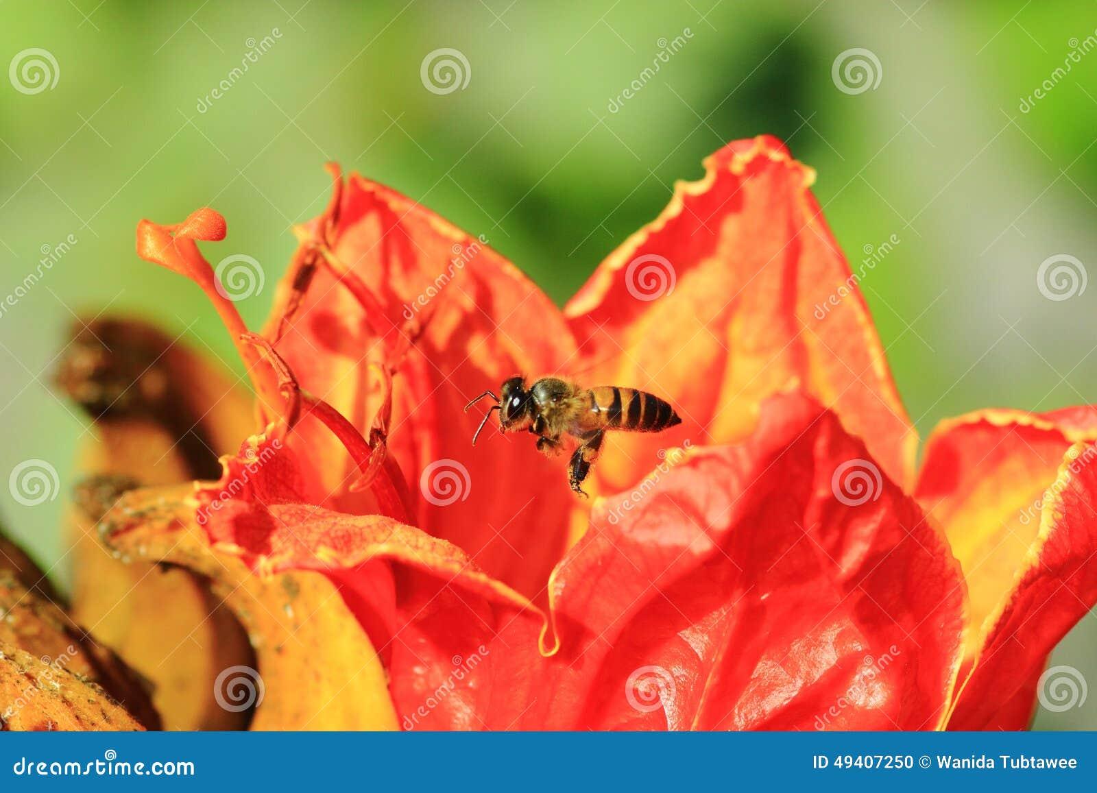 Download Bienen Und Blumen Sind Schön Stockfoto - Bild von fields, bündel: 49407250