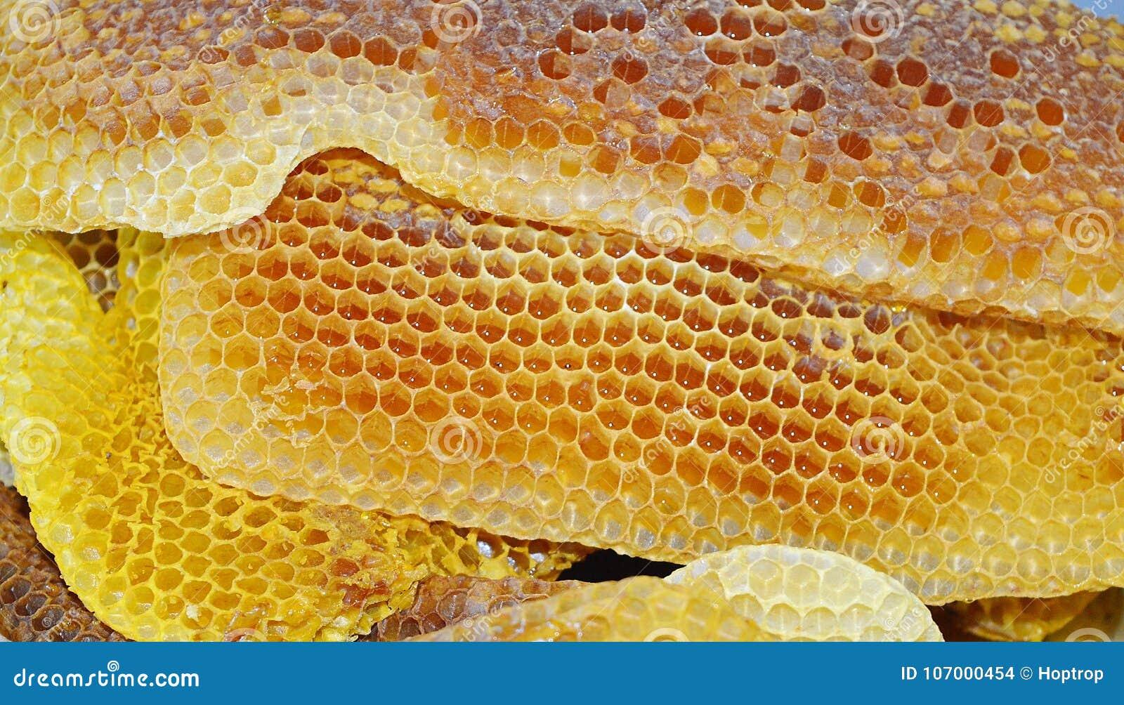 Bienenhonig-API melifera rodopica Makrobild