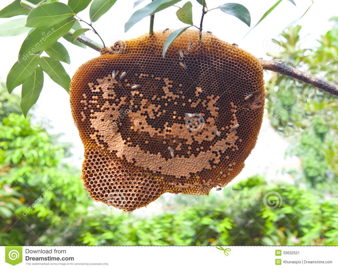 Image Result For Build A Honey Bee House