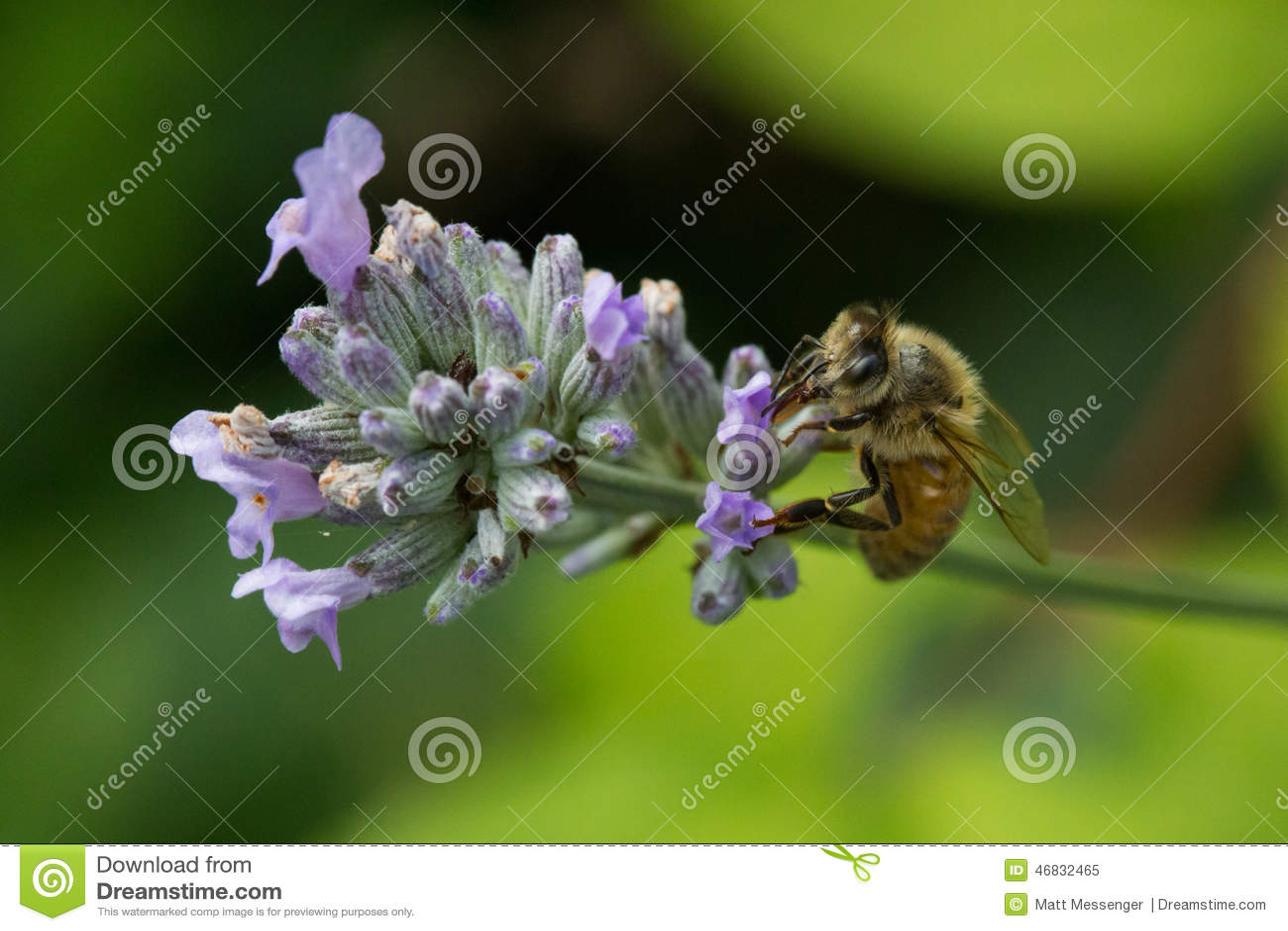 Biet detailed honung isolerade makroen staplade mycket white