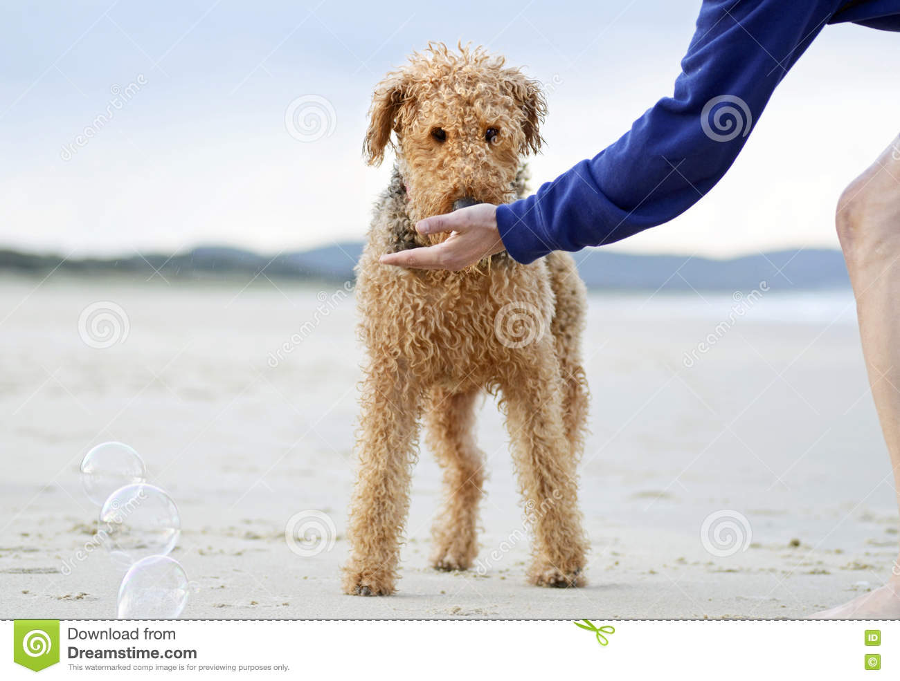 Cute Family Member On The Beach RoyaltyFree Illustration  CartoonDealer.com 84775722