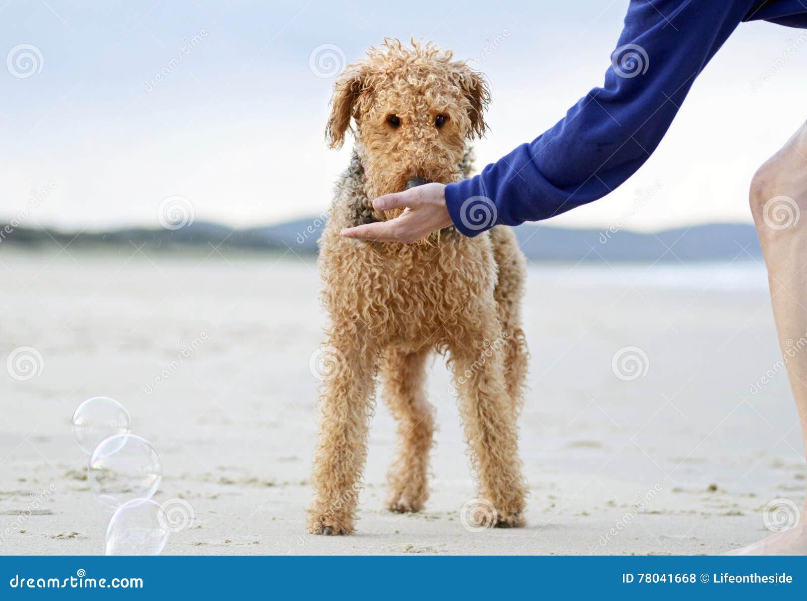 Cute Family Member On The Beach RoyaltyFree Illustration  CartoonDealer.com 84775722