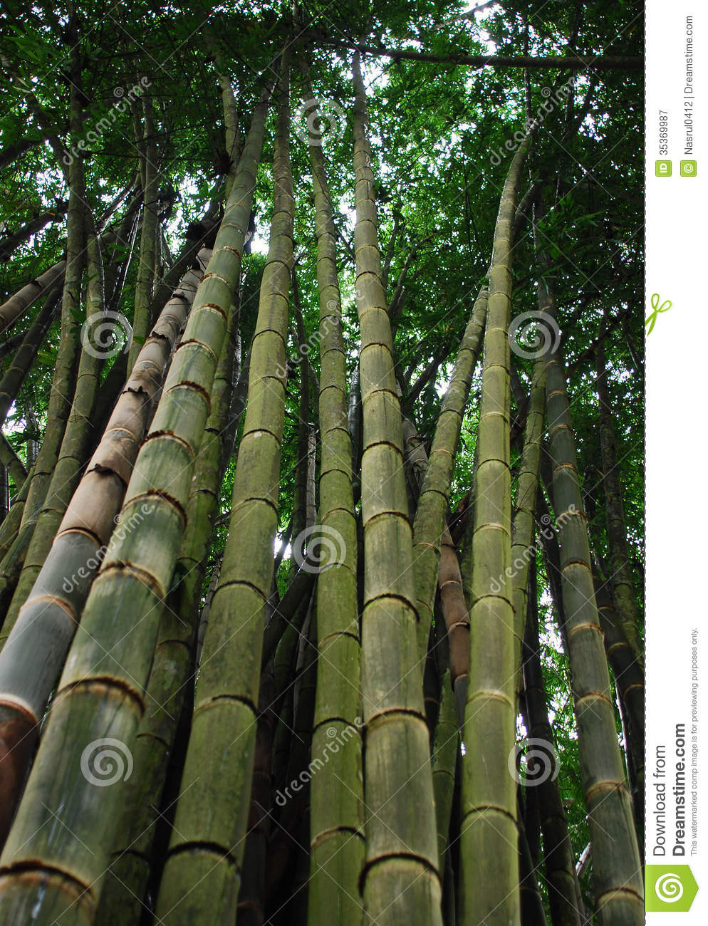 big bamboo tree royalty free stock photography image 35369987. Black Bedroom Furniture Sets. Home Design Ideas
