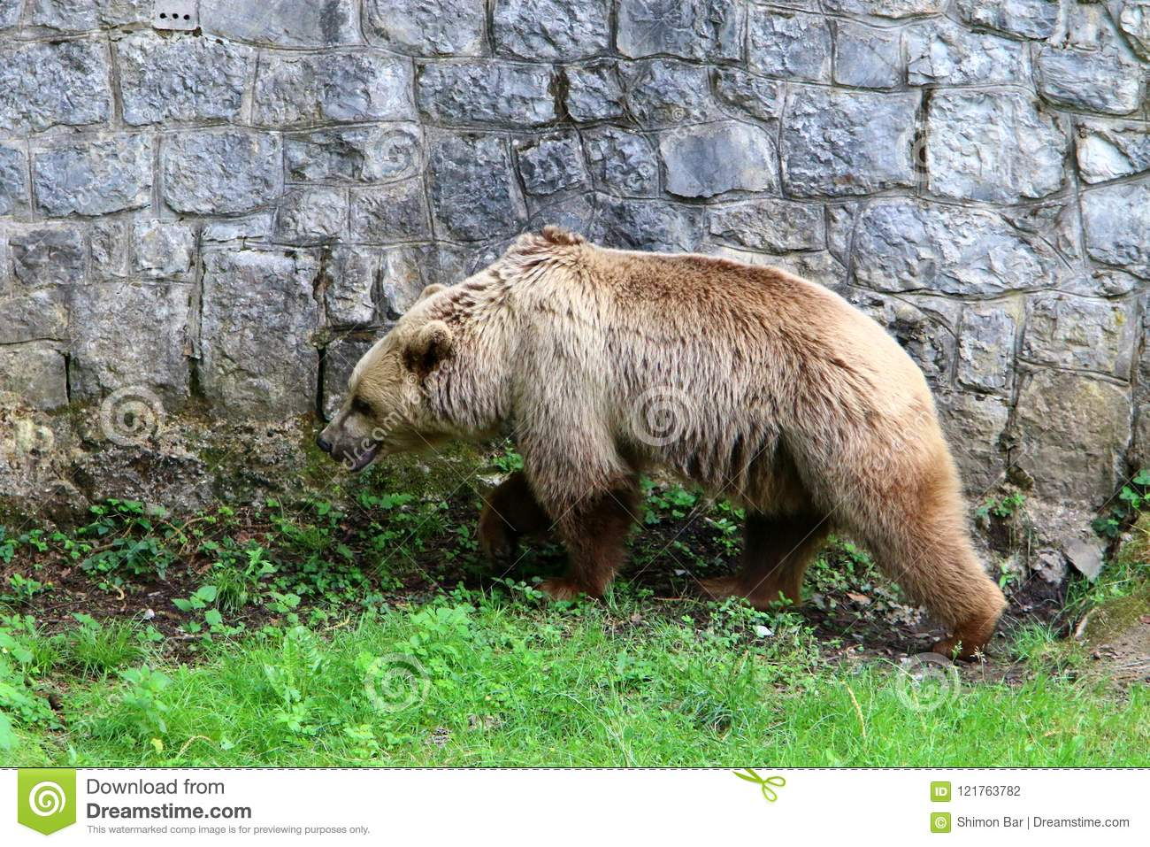 Bear lives in the zoo stock photo. Image of summer, branch - 121763782