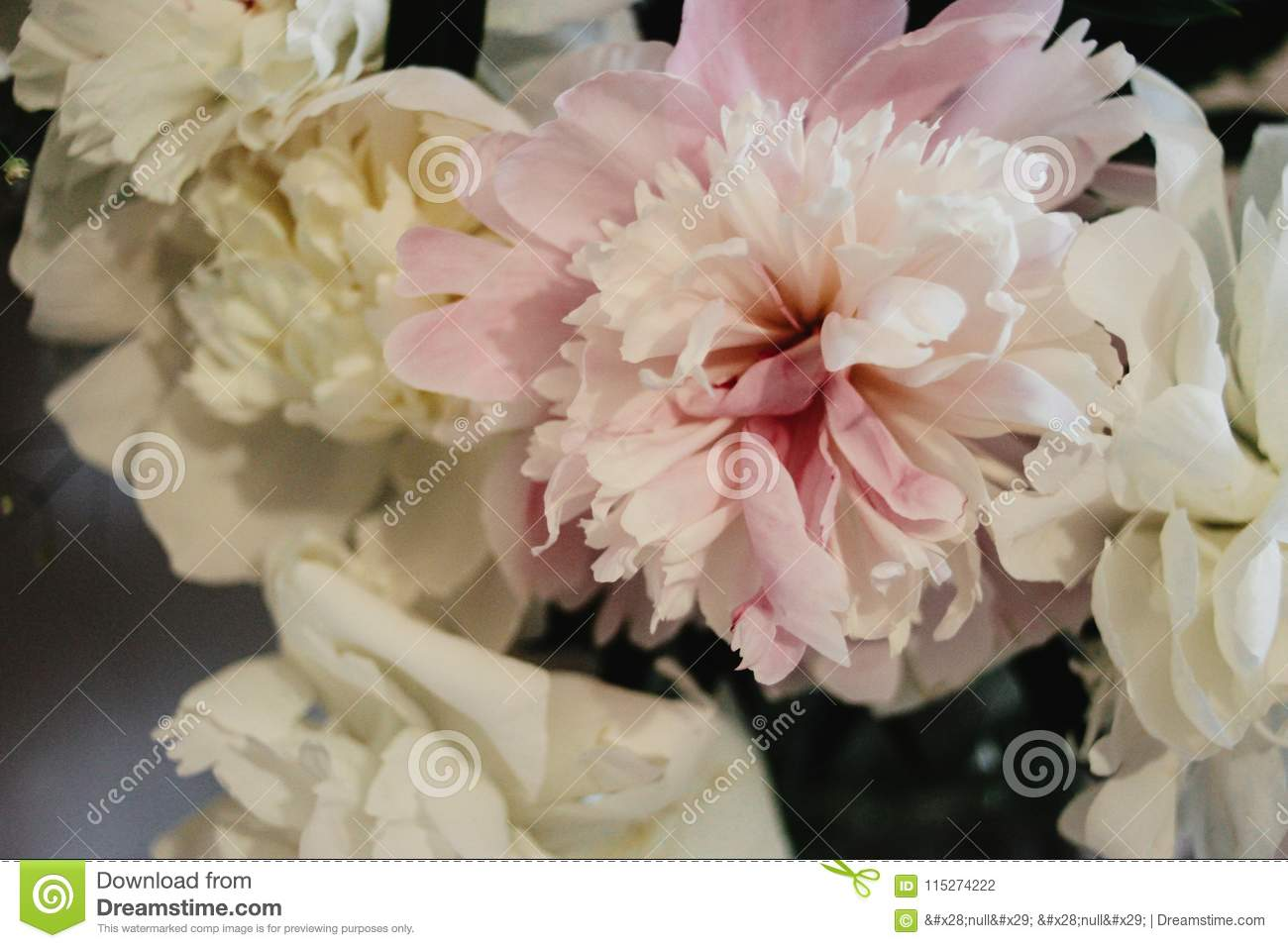Big Beautiful Pink And White Peonies Flowers On Old Table In Rus