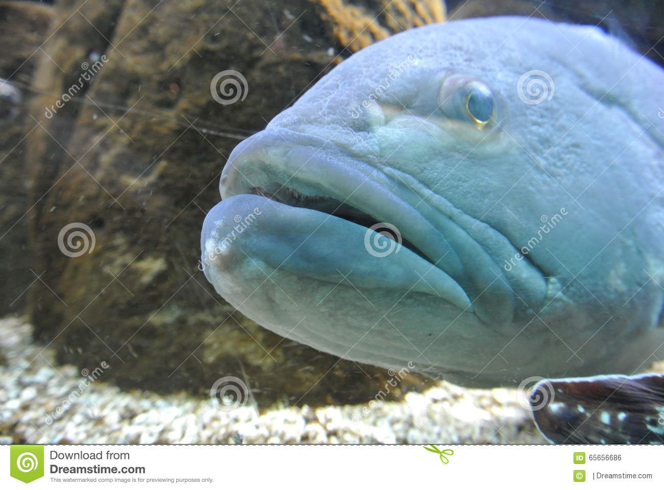 Big blue fish in the sea stock photo image 65656686 for Big fish in the ocean