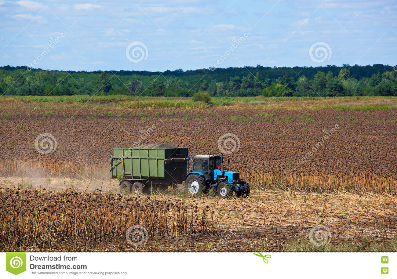Big Blue Tractor Rides Through The Field With A Trailer Loaded With ...