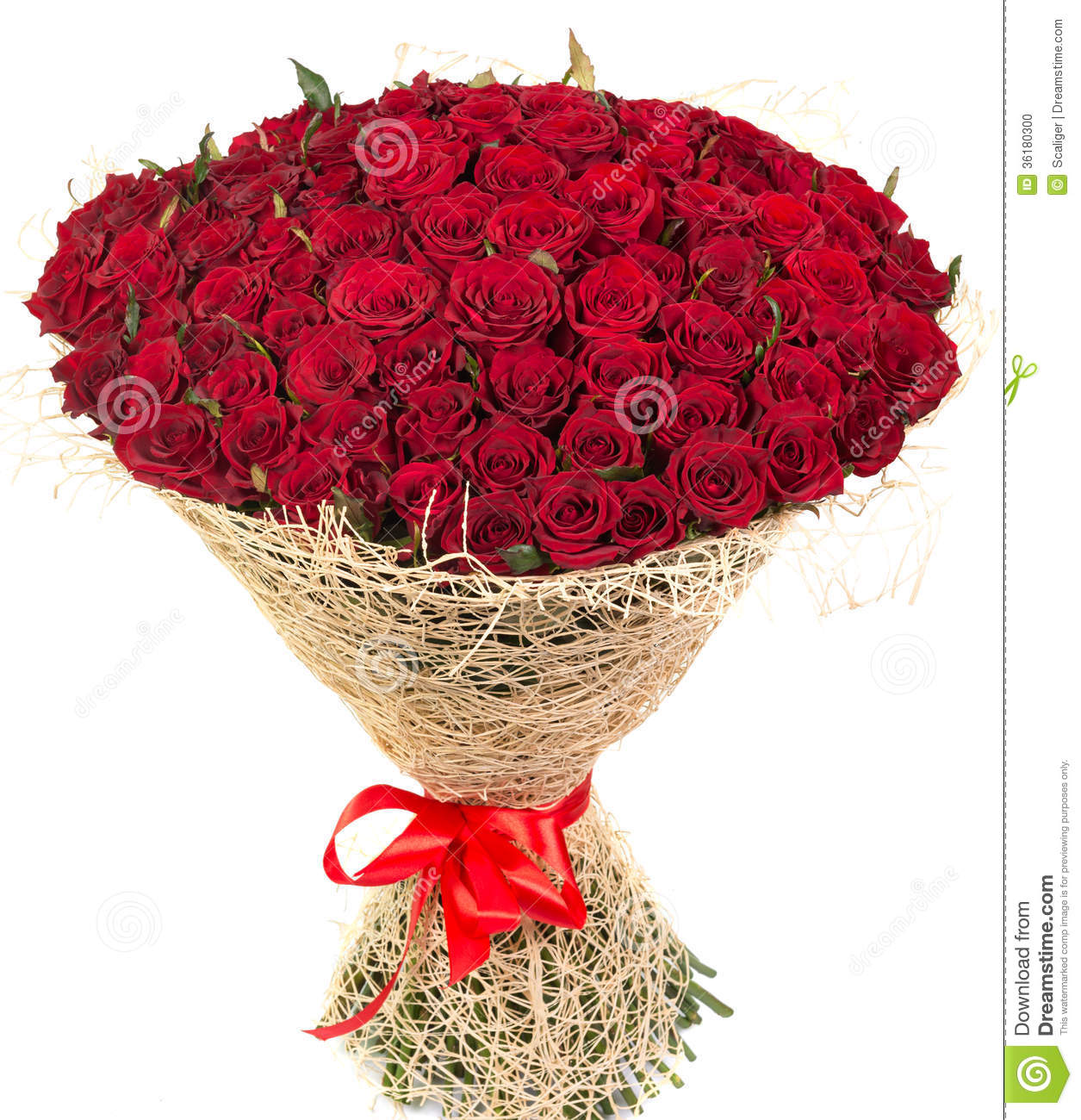 Big Bouquet Of Red Roses Stock Photo Image Of Celebrating 36180300