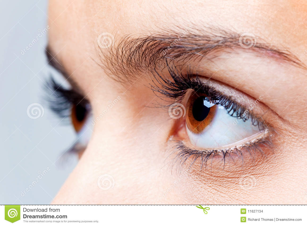 Big Brown Eyes Stock Images - Image: 11627134