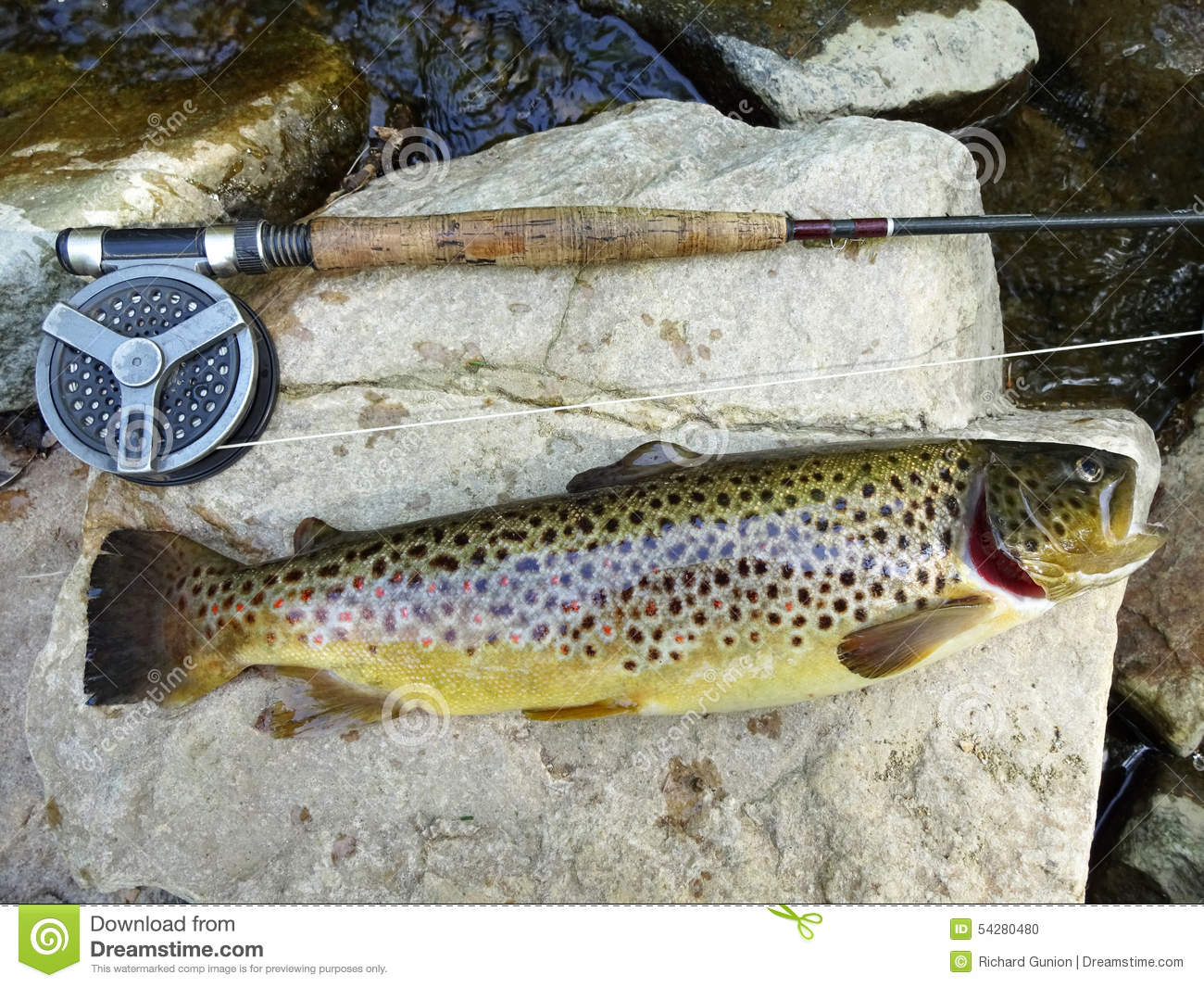 Big brown trout stock photo image 54280480 for Trout fishing maryland