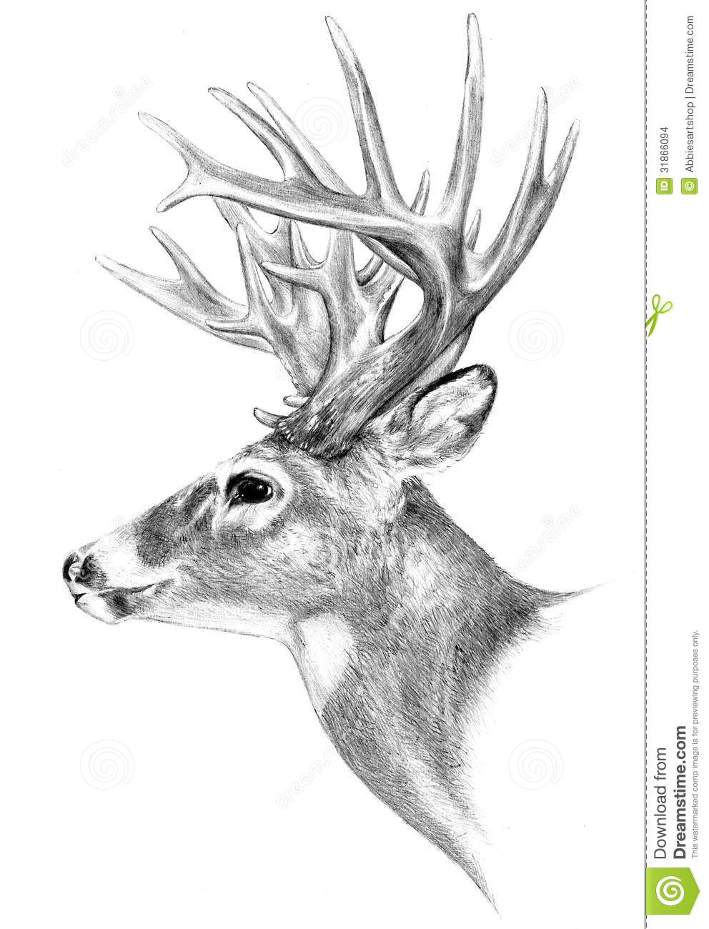 Deer Hunting Drawing Images amp Pictures Becuo