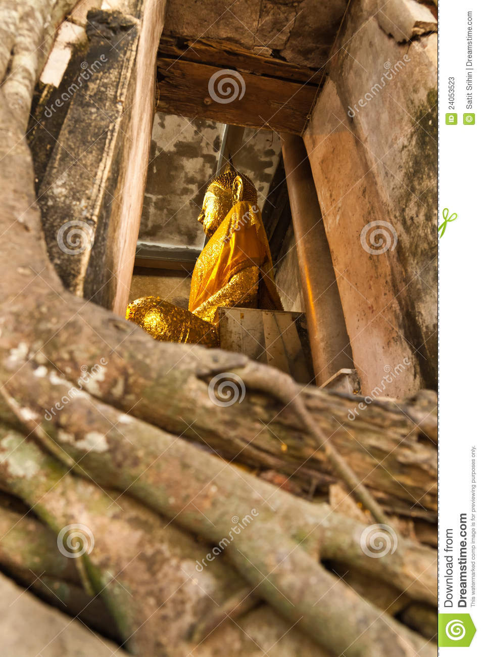 Big buddha in church cover by old big tree root