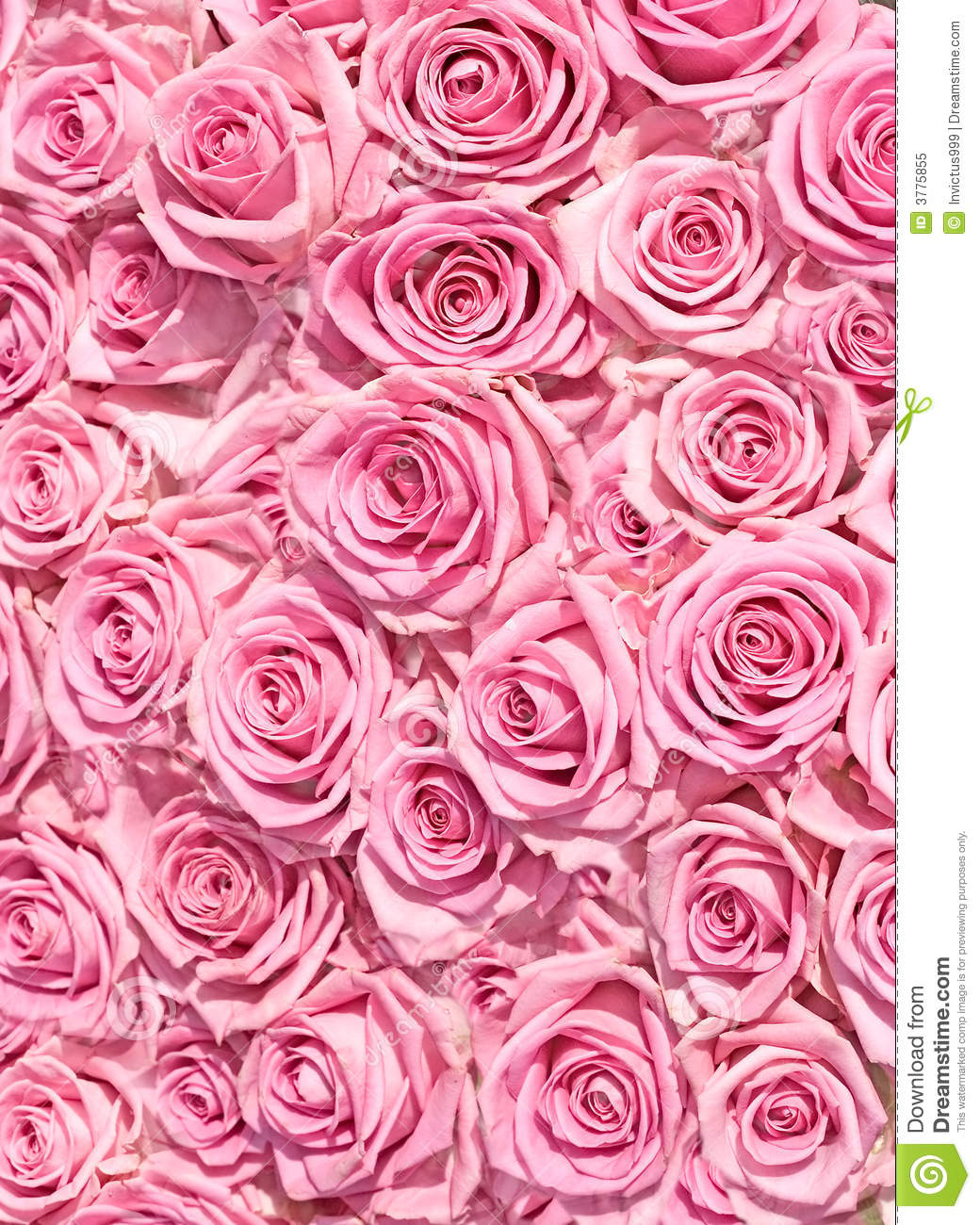 Big bunch of multiple pink roses of a bride on a wedding from top  of