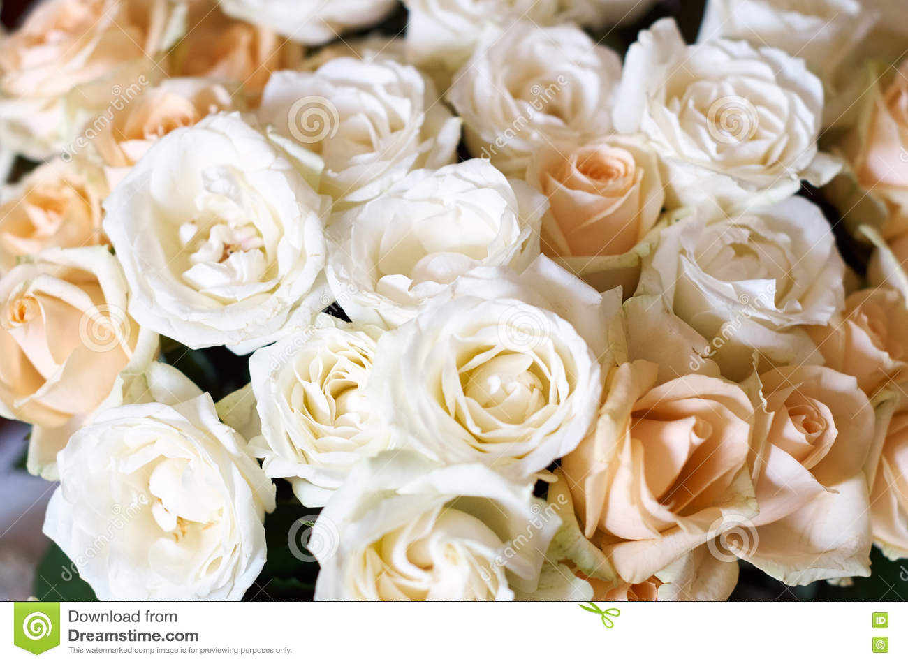 Big bunch of multiple pink roses royalty free stock photo - Big rose flower wallpaper ...