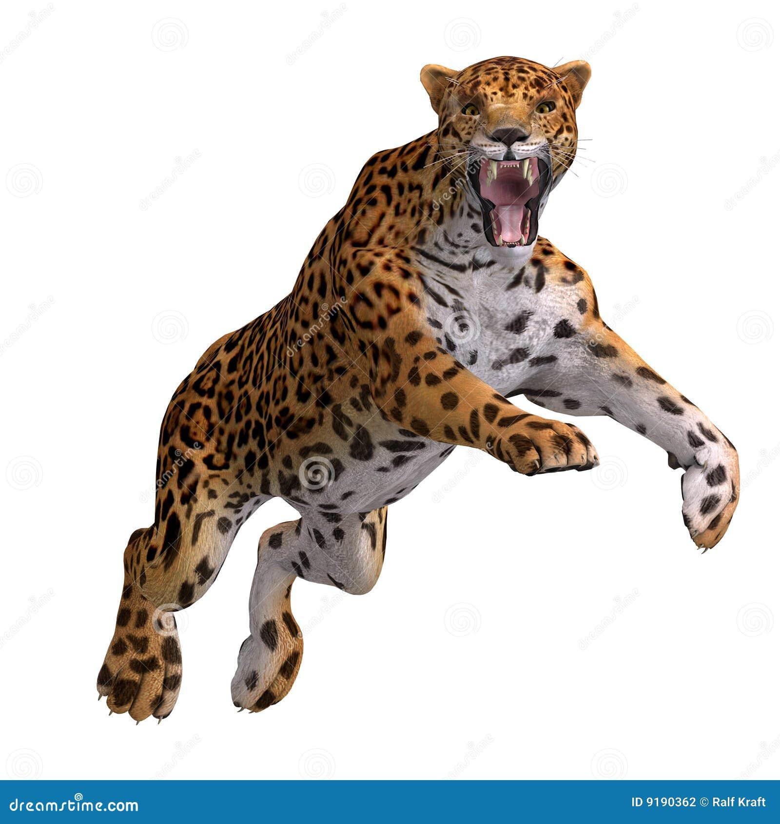 Jaguar Running: Big Cat Jaguar Stock Photography