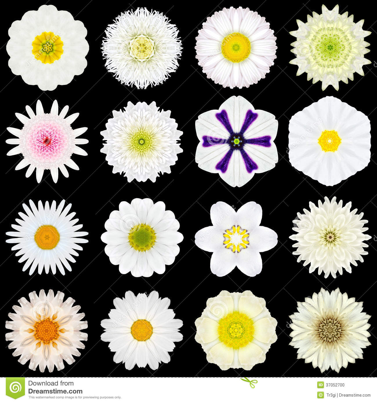 Tutti I Tipi Di Fiori Bianchi.Big Collection Of Various White Pattern Flowers Isolated On Black