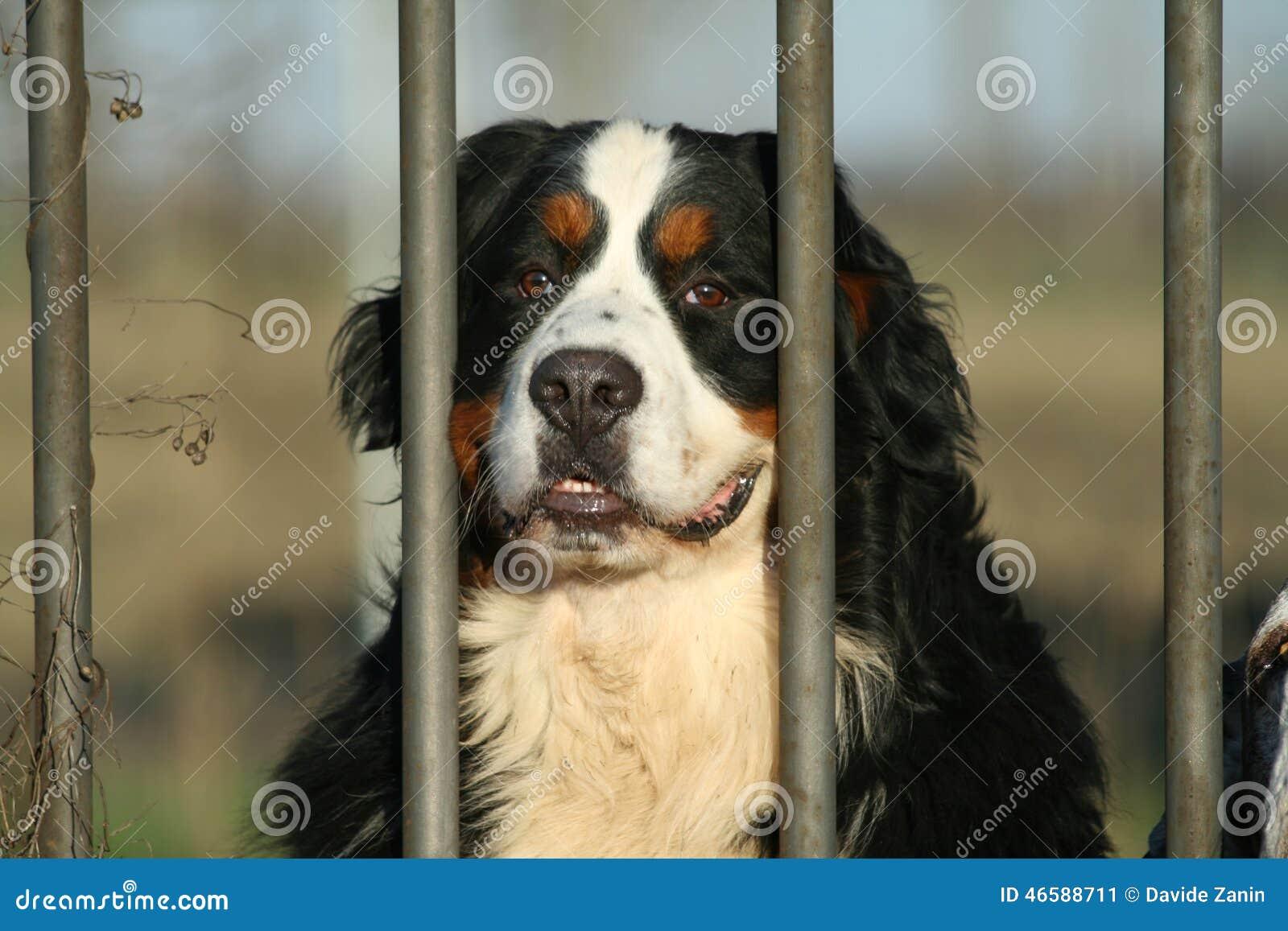 dog breeds herding dog breeds short haired dog breeds list healthy dog ...