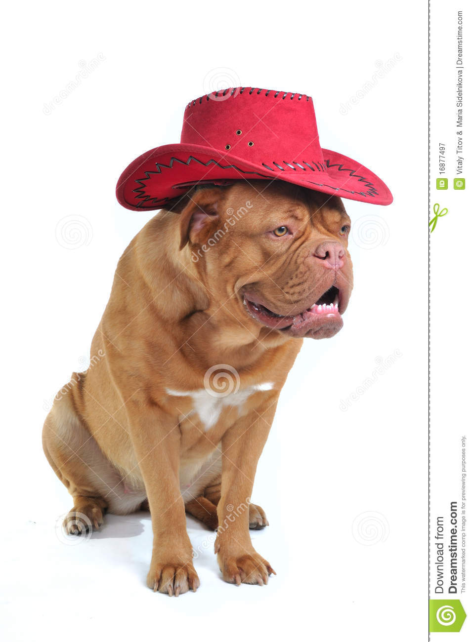 Big Dog In Cowboy Hat Stock Image Image Of Close Culture