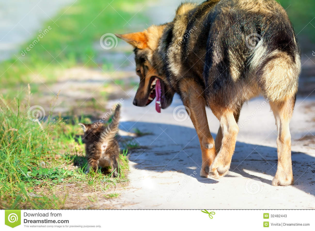 Big Dog And Little Kitten Stock Photos Image 32482443