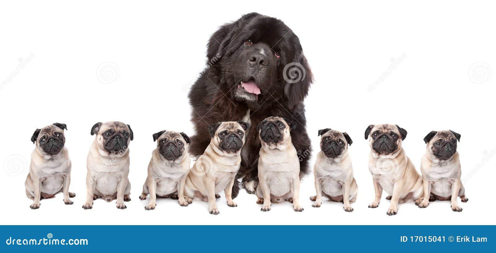 Big Dog Small Dogs Stock Image - Image: 17015041