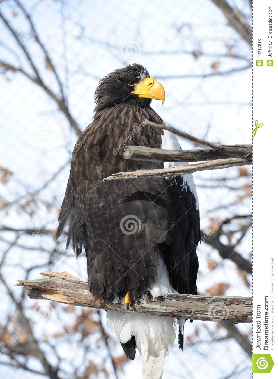 Fantastic Cadsoft Eagle Download Image - Everything You Need to Know ...