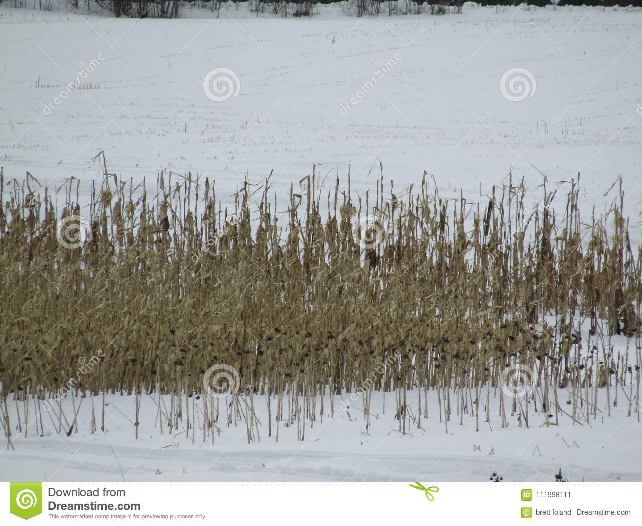 Field With Snow And Snowmobile Tracks Stock Image - Image of tracks