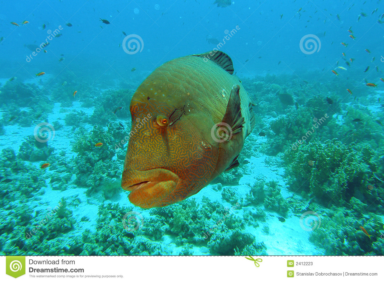 Big Fish Stock Photos Image 2412223