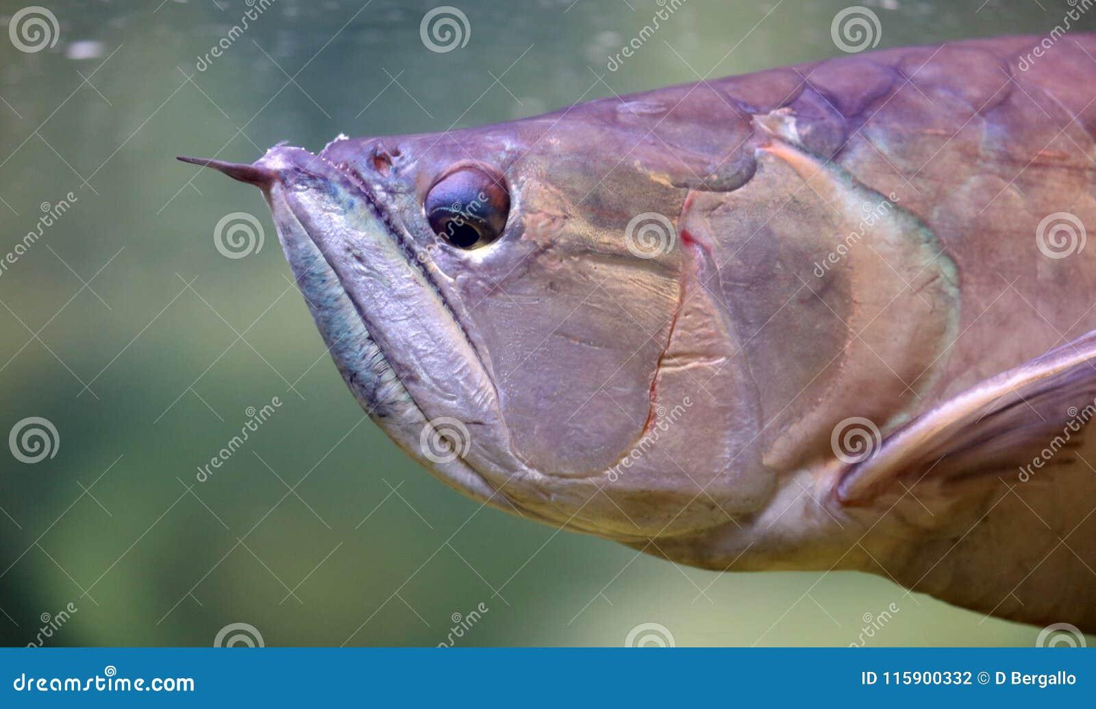 Big fish in aquarium at ocean, sea alt creature