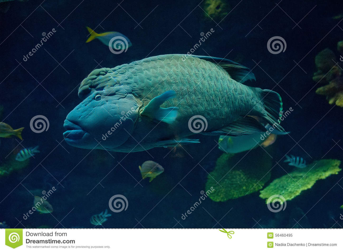 Big fish stock photo image 56460495 for Large ocean fish
