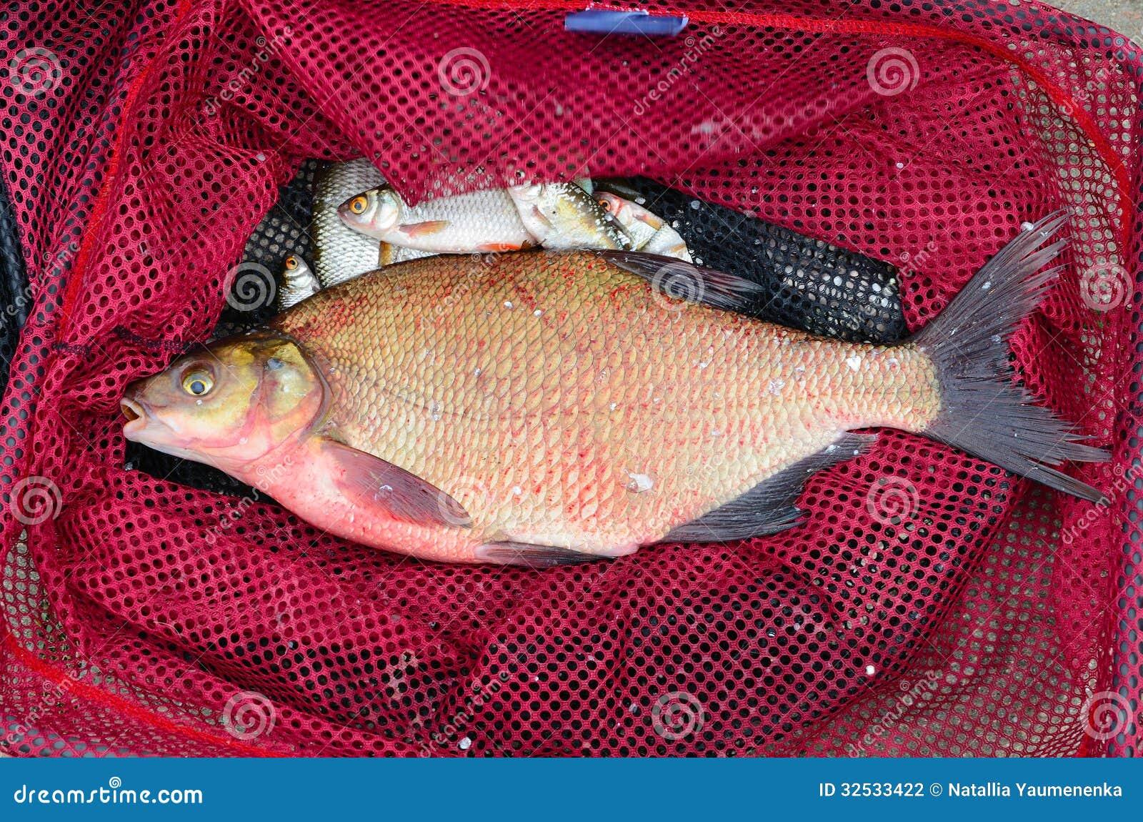Big fish stock photography image 32533422 for Big fishing net