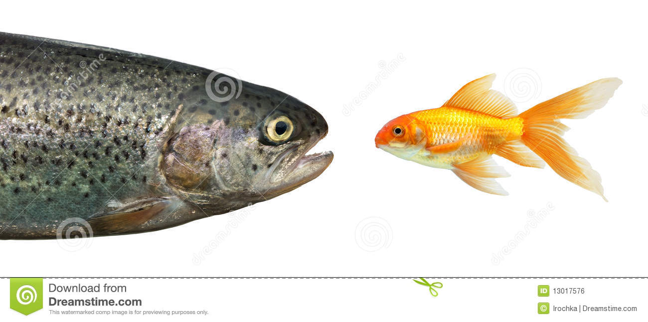 Big fish little fish royalty free stock image image for Big fish little fish