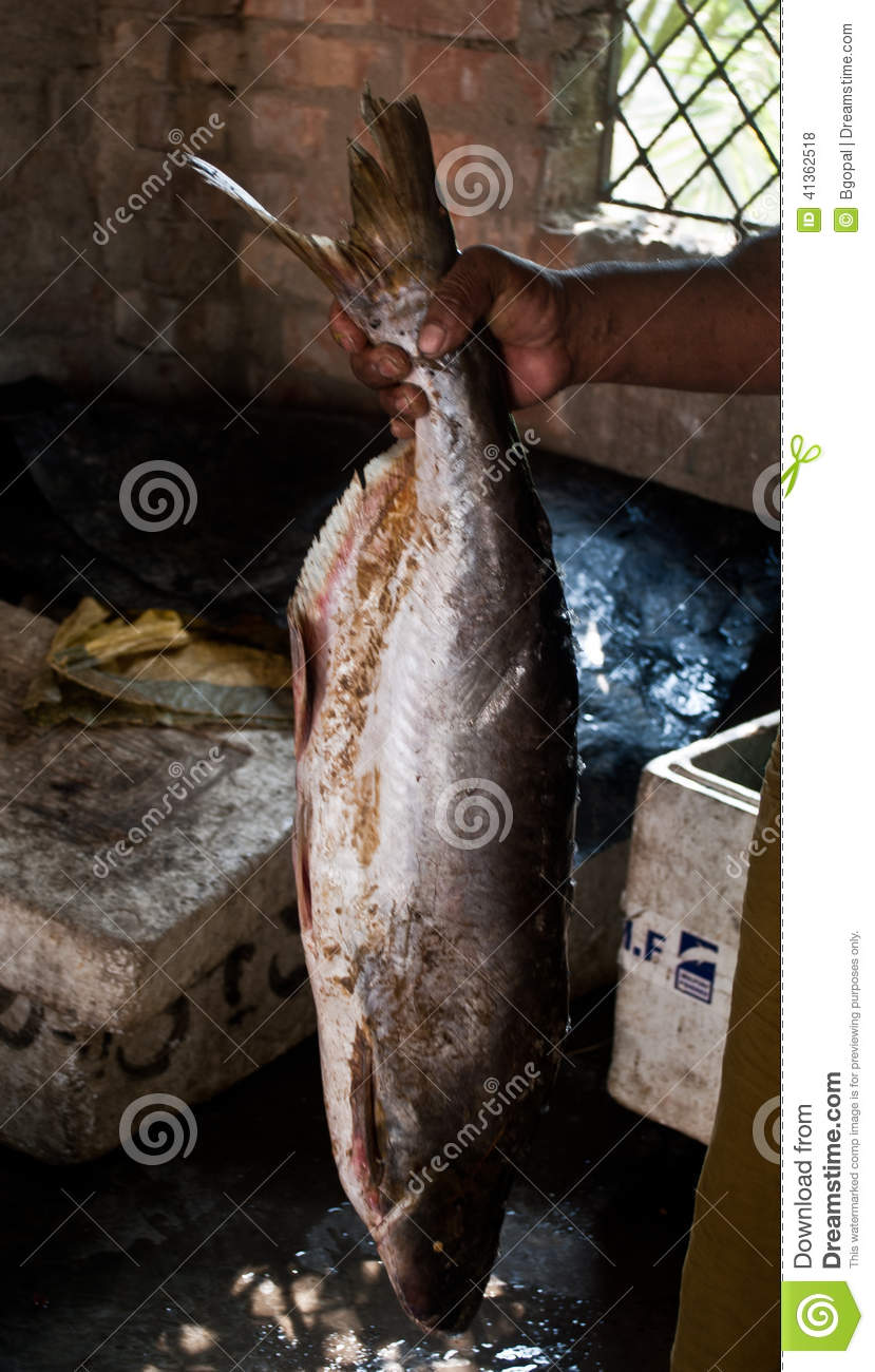 Big fish editorial stock photo image 41362518 for People catching fish