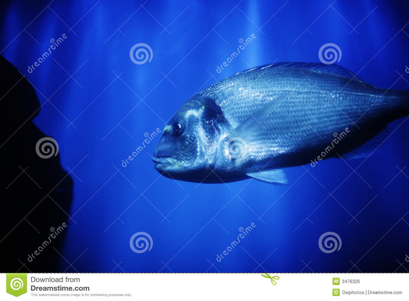 Big fish in ocean stock photo image of biology clear for Large ocean fish