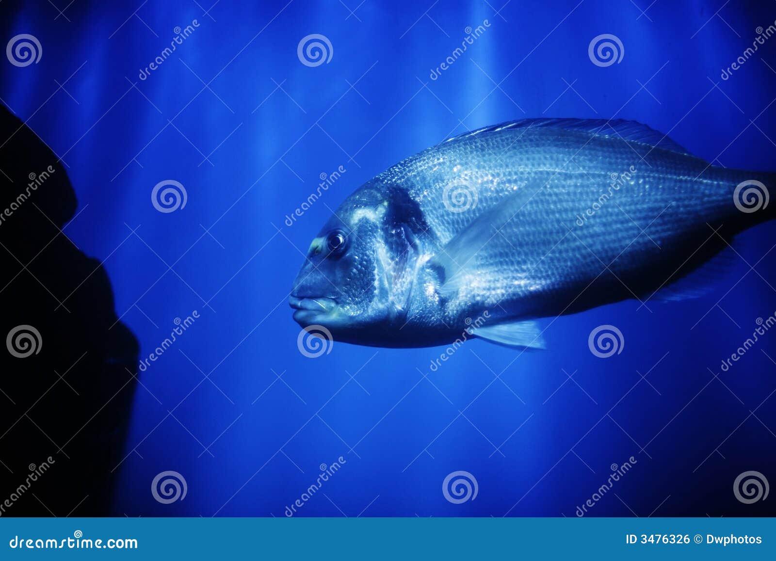 Big fish in ocean royalty free stock image image 3476326 for Big fish in the ocean