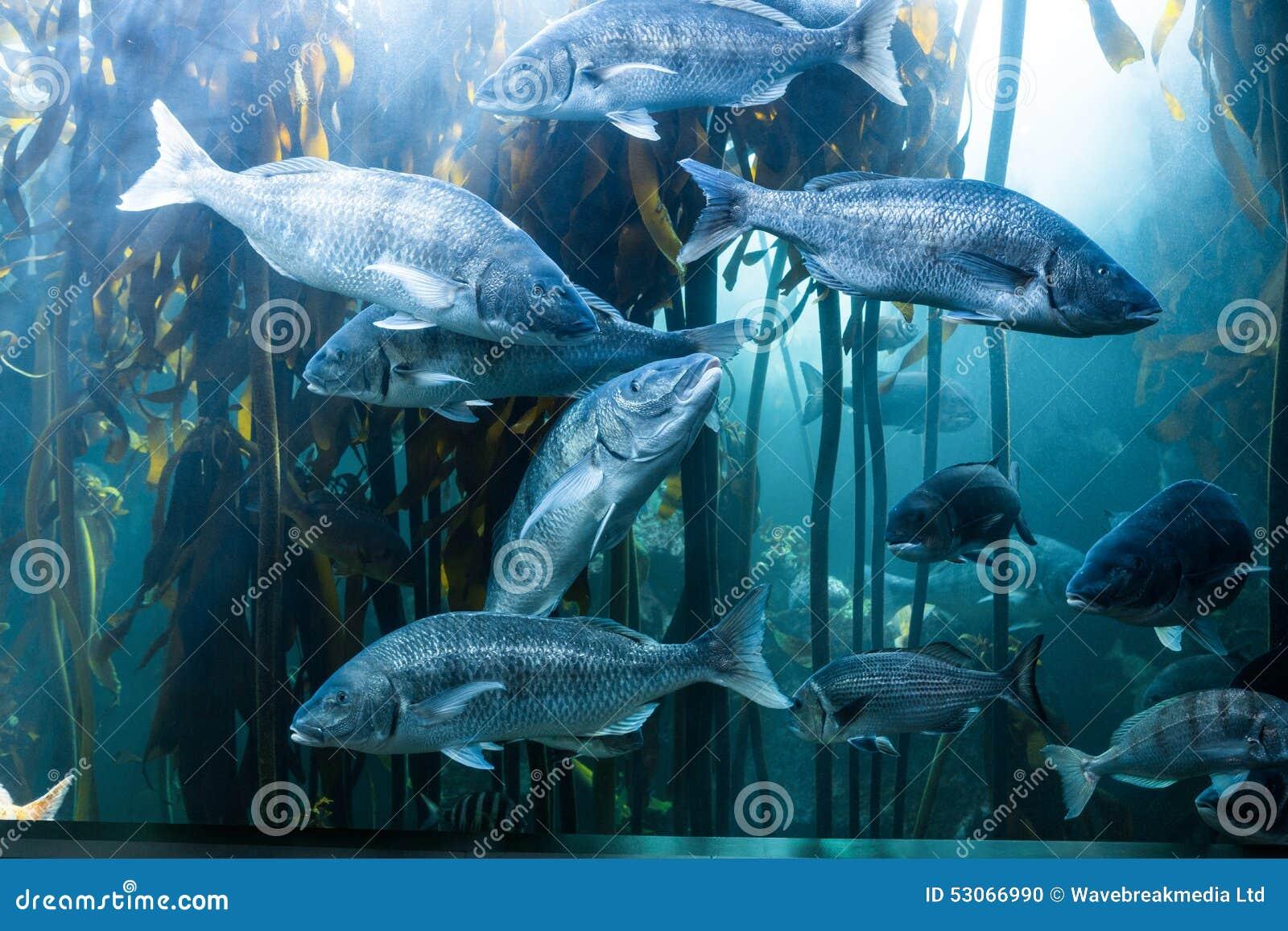Fish in big aquarium - Big Fish Swimming In A Tank