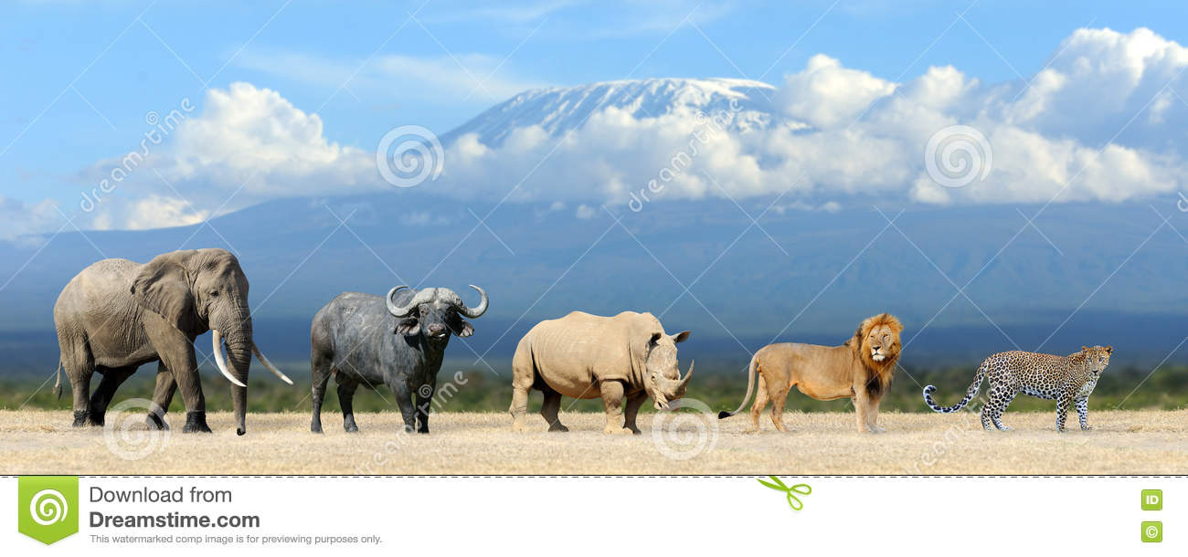 Big five africa - Lion, Elephant, Leopard, Buffalo and Rhinoceros.