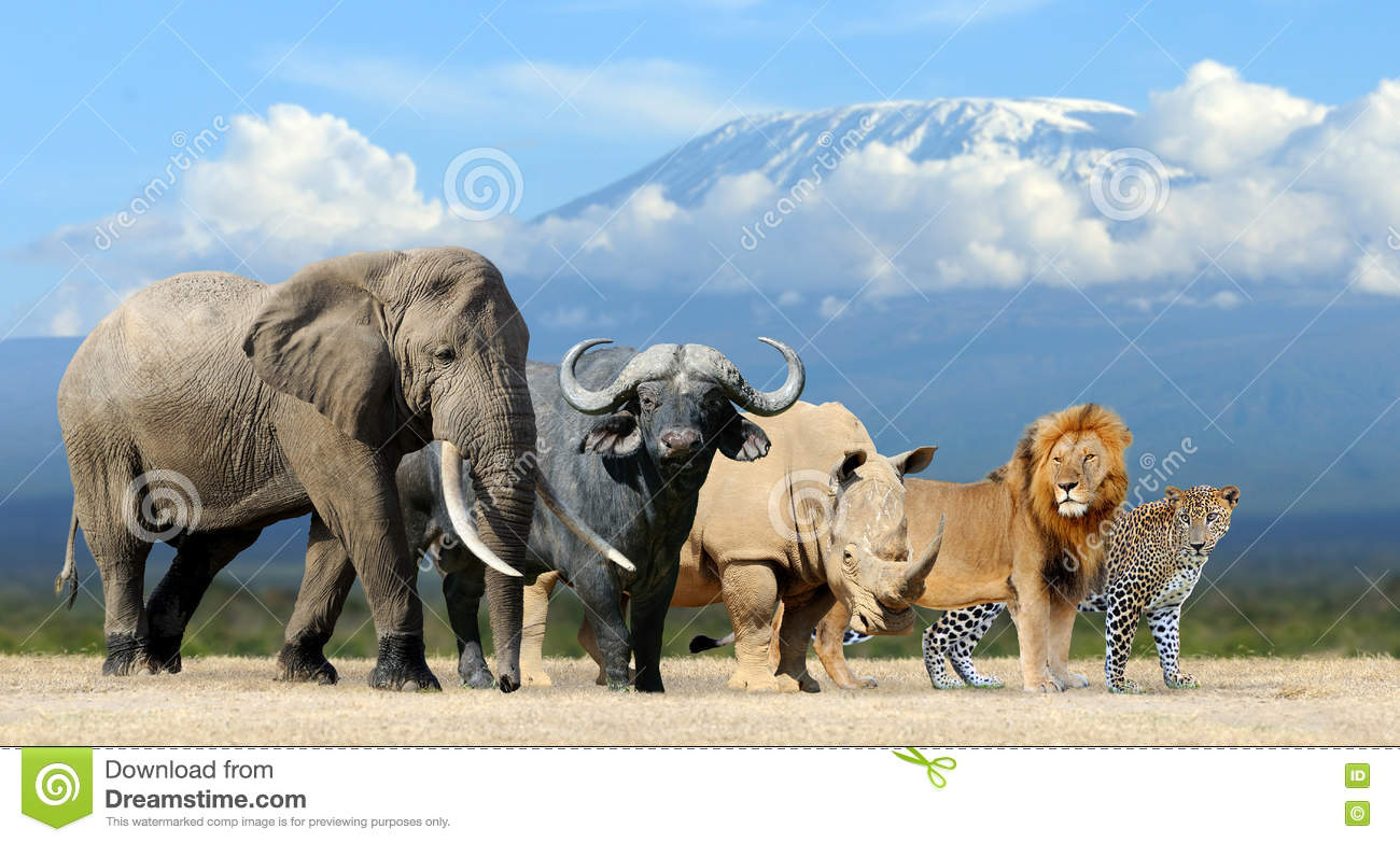 South africa big 5 animals pictures