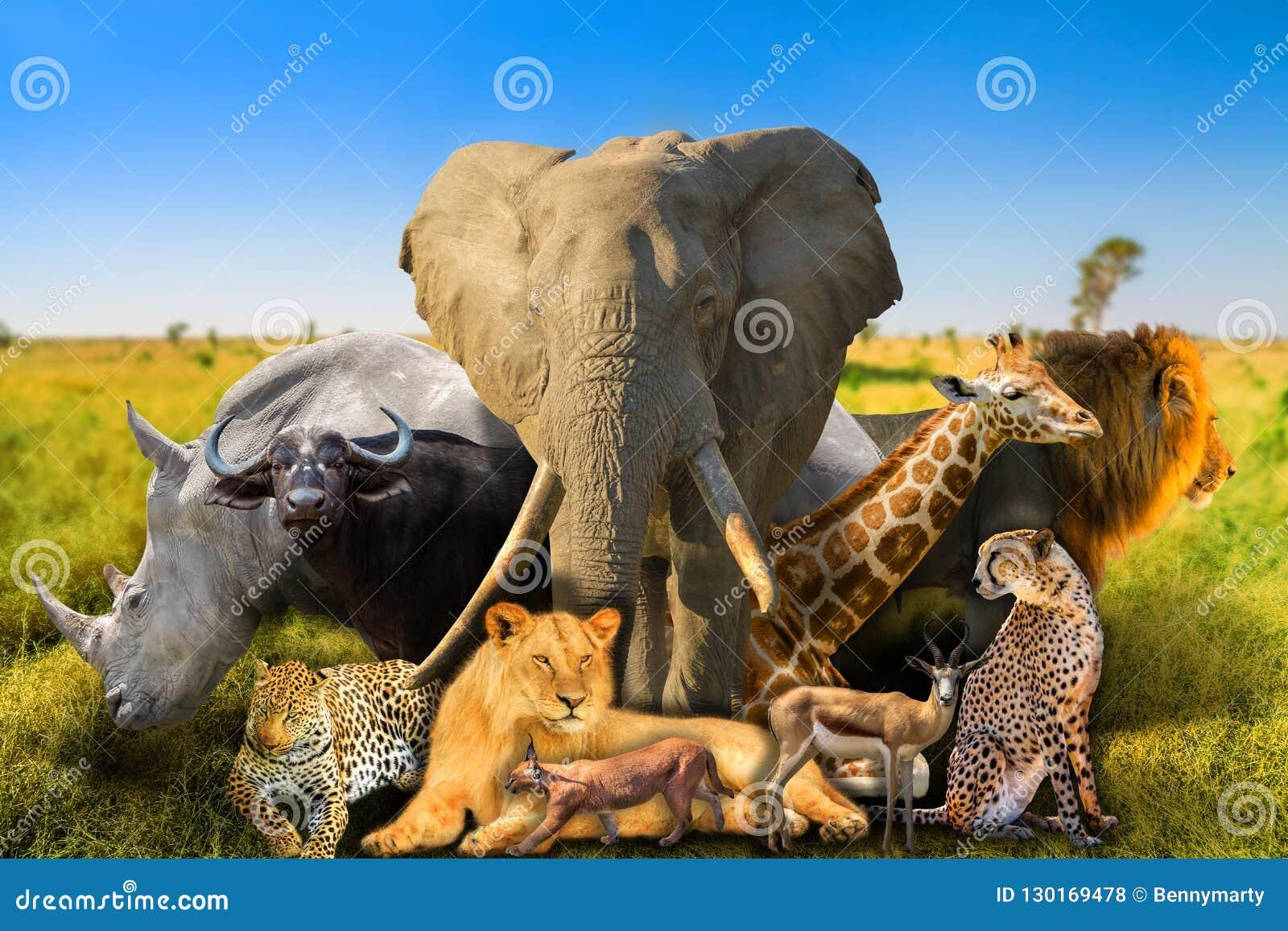 Wild african animals background