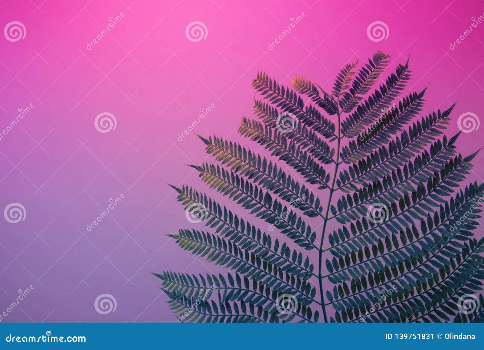 Big fresh fern leaf on duotone purple violet blue background. Trendy neon colors. Toned. Minimalist style. Contemporary unique
