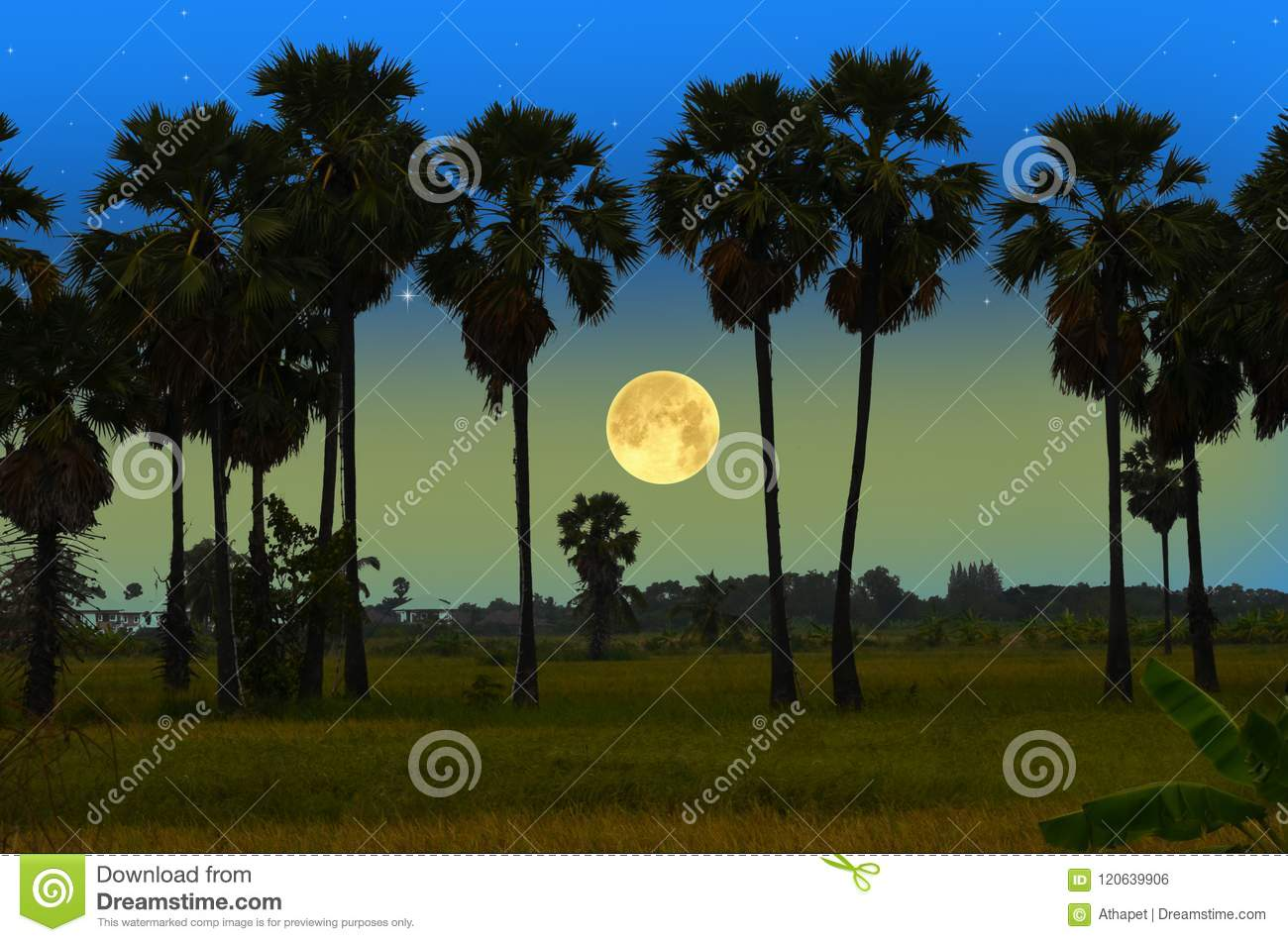 big full moon and palms in the winter evening stock illustration