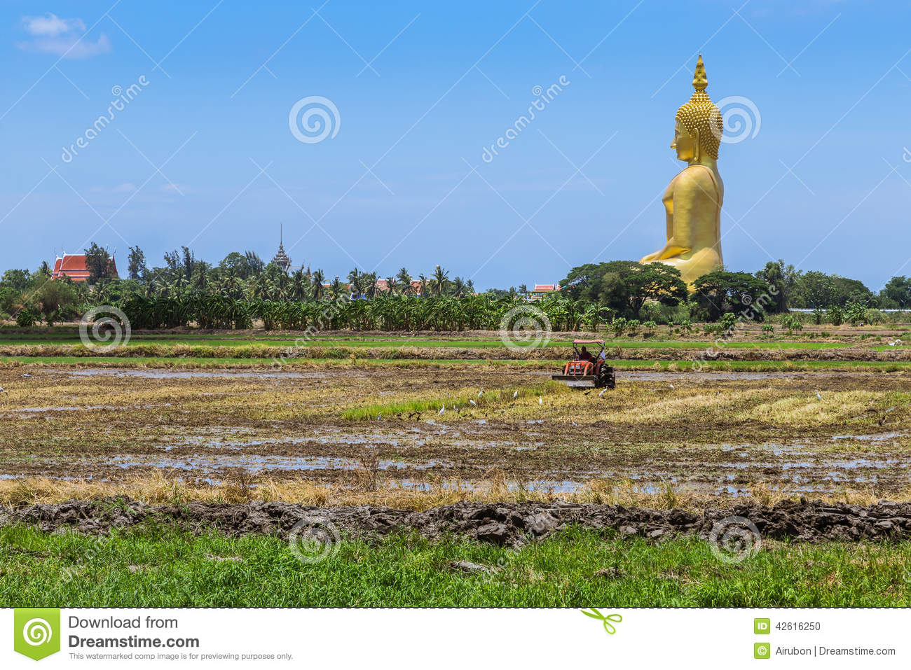 golden meadow buddhist dating site As an extremely rare geological phenomenon dating back to 270 apart from fine depictions of buddhist deities drive out to the yak meadow of the jade.