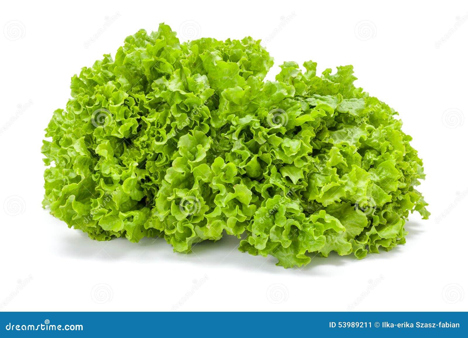 big green leaf lettuce stock image image of healthy 53989211