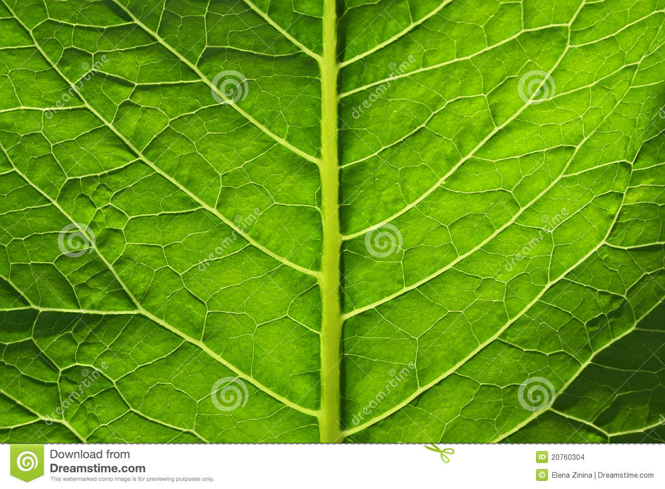 Big Green Leaf Of A Plant Stock Images Image 20760304