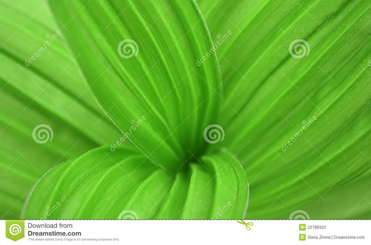 Big Green Leaf Of A Plant Stock Photography Image 22788322