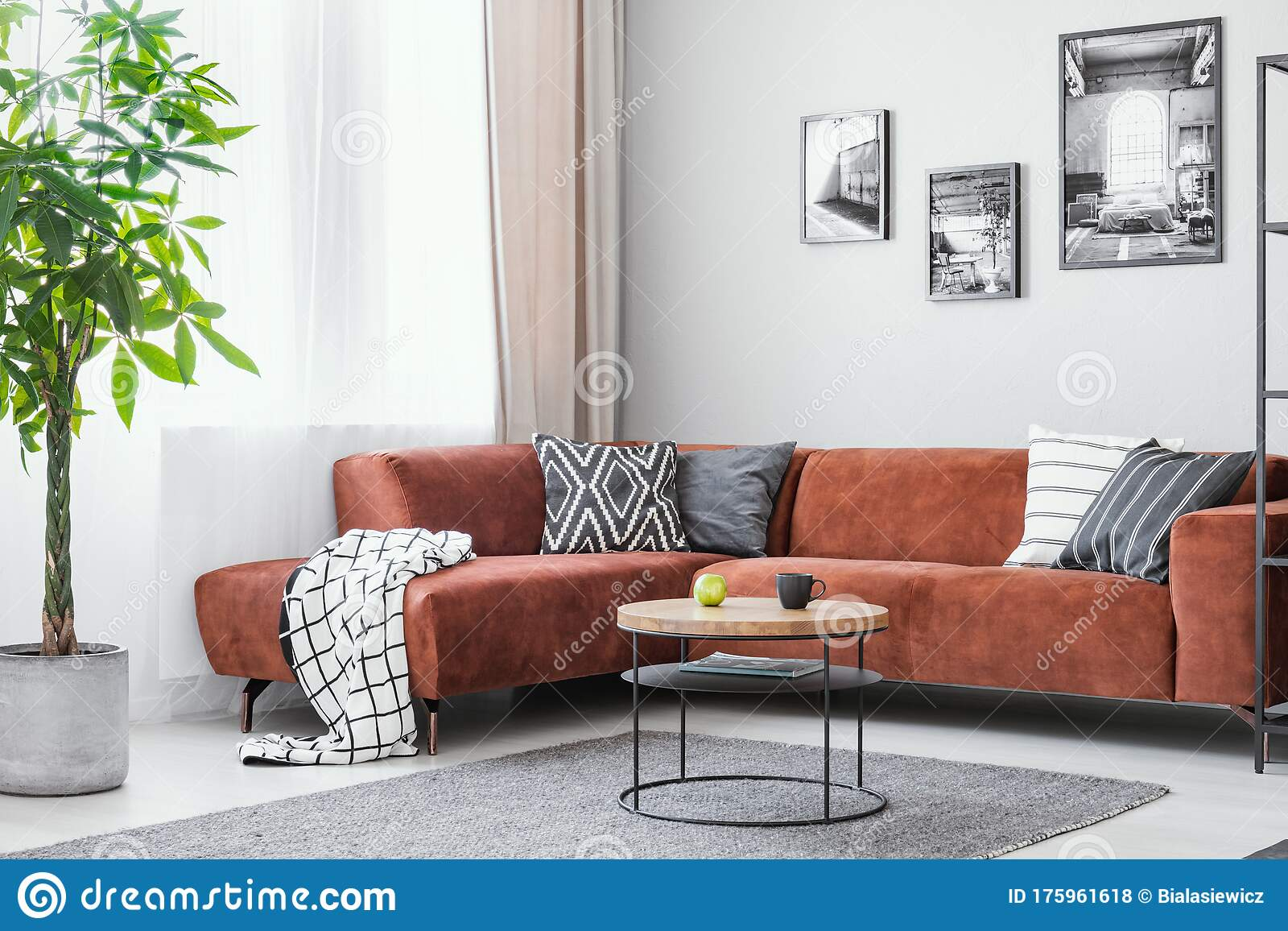 Big Green Plant Small Round Coffee Table And Corner Sofa In Elegant Living Room Interior Stock Photo Image Of Couch House 175961618