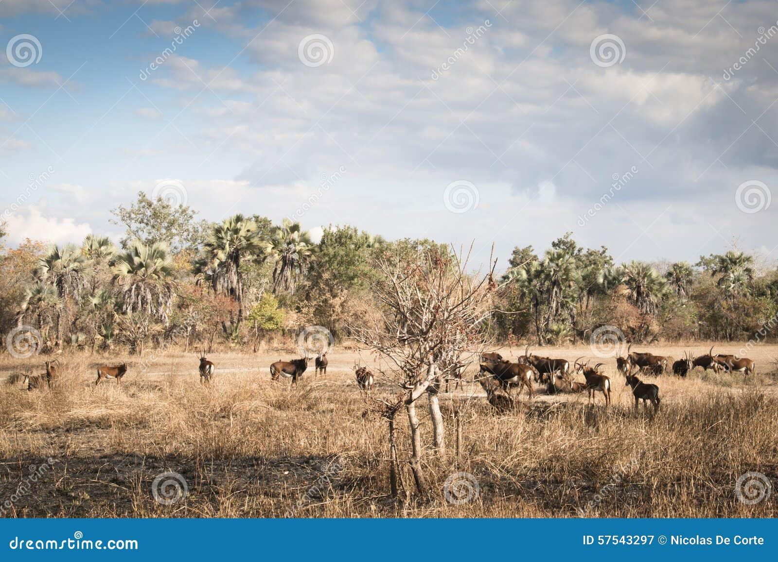Savanna Food Production