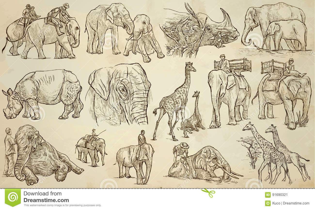 Vector Line Art Animals : Big and heavy animals an hand drawn vector pack line art stock