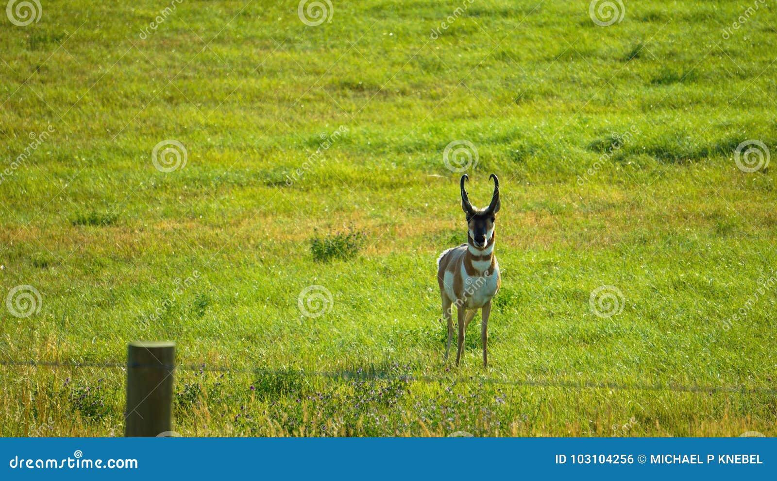 Big Horn góry w bizonie