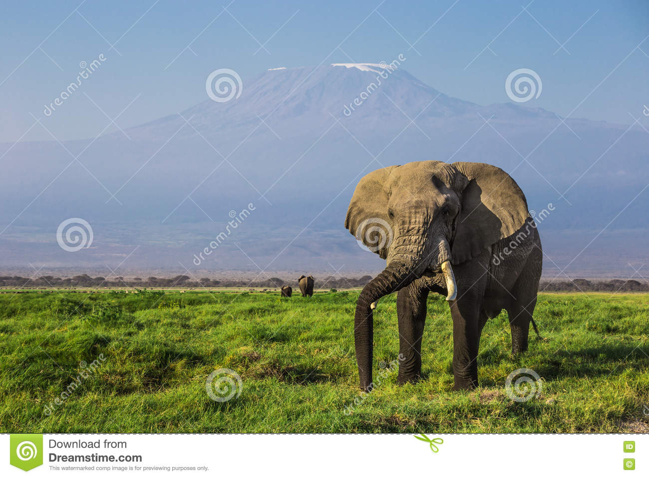 Big male African elephant with the mount Kilimanjaro in the background in the Amboseli national park (Kenya)