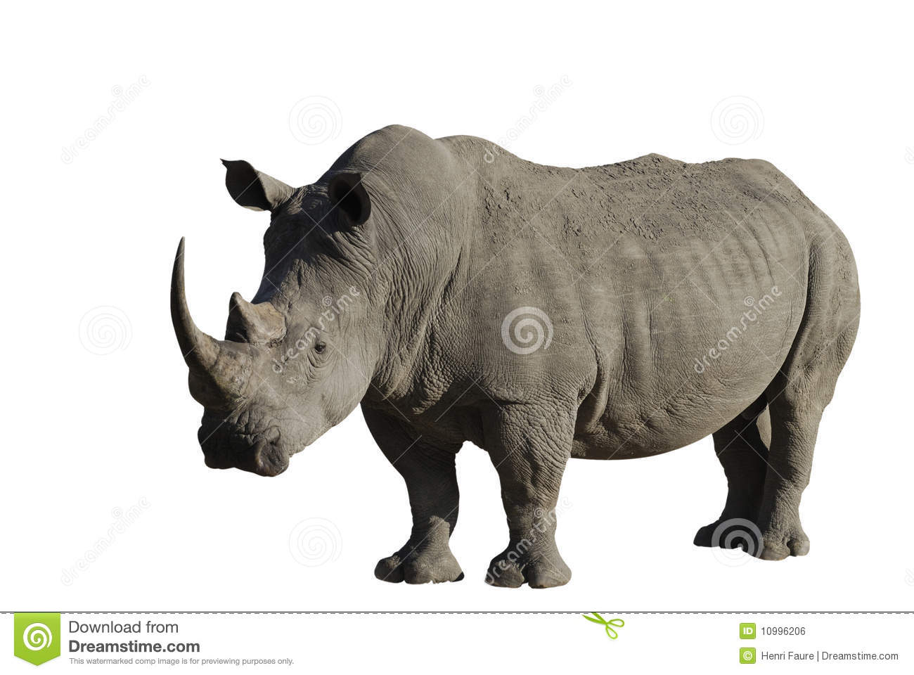 big male rhinoceros royalty free stock image image 10996206 baby rhinoceros clipart rhinoceros clip art black and white